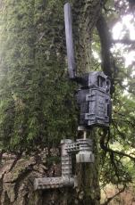 Baumstativ für alle Spypoint Wildkameras